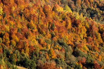 Fall mountain forest, autumn colorful trees texture background