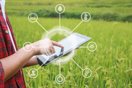Smart farming, using modern technologies in agriculture. Man agronomist farmer with digital tablet computer in field using apps and internet of things(IOT) in production and agricultural research