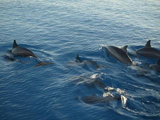 Autocollant pour porte Dauphin dolphin