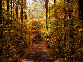 Bright autumn landscape, road in the forest