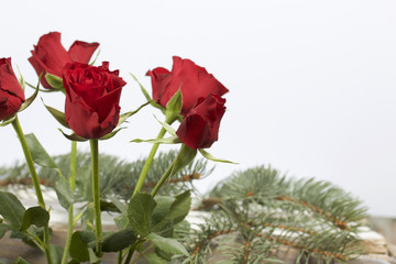 A bouquet of scarlet roses. Five flowers. On a white background