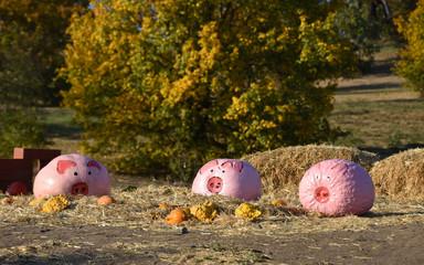 Painted pumpkins stock images. Cute piggy pumpkin. Halloween pumpkin decoration in the garden. Three fairy pigs