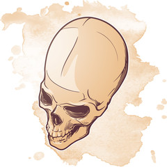 Human Skull hand drawing. Three quarters angle. Linear drawing painted in 3 shades, isolated on white background. EPS10 vector illustration