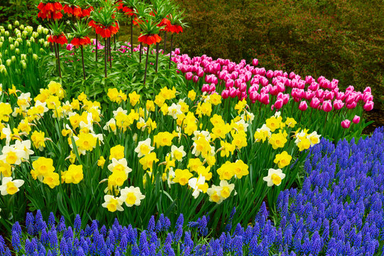 floral background - fresh spring lawn with daffodils, tulips and bluebell flowers