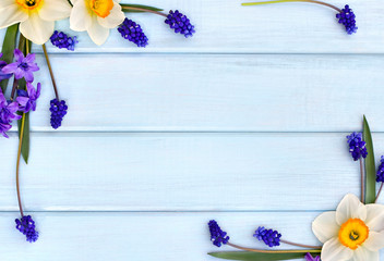 Narcissus, hyacinths and flowers muscari on background of blue painted wooden planks with space for text. Top view. Flat lay.