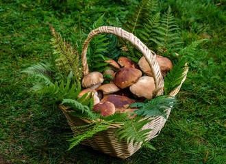 Basket of porcini mushrooms