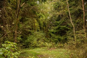 wild green forest woods