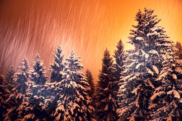 Evening snowfall in the mountains with snow-covered pines