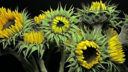 Vans Cedar Floral Trainer | Rosafarbene Blumen | Damen