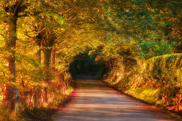 beautiful road in autumnal forest