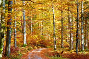 Wunderfull colors of autumn in austrian primeval forest