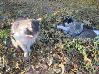fluffy cats relax in nature