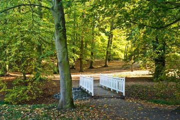 White small bridge in the park in the autumn