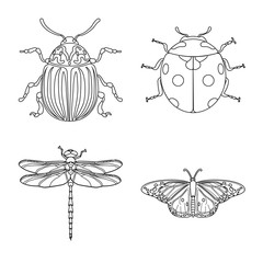 Vector illustration of insect and fly sign. Set of insect and element stock vector illustration.