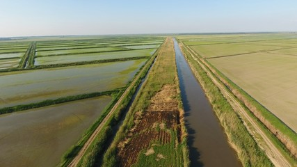 Growing rice on flooded fields. Ripe rice in the field, the beginning of harvesting. A birds-eye view. Flooded rice paddies. Agronomic methods of growing rice in the fields. Flooding the fields with