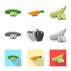 Isolated object of vegetable and fruit icon. Collection of vegetable and vegetarian stock symbol for web.
