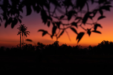 Silhouette of palm trees at tropical sunset on Bali island.