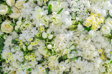 artificial blooming peonies and narciccus,  white color floral background.