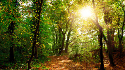 Autumn forest with path and bright sun Wall mural