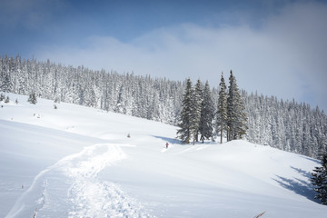 Winter landscapes in the Carpathians: a path, a forest, a wooden kolyba
