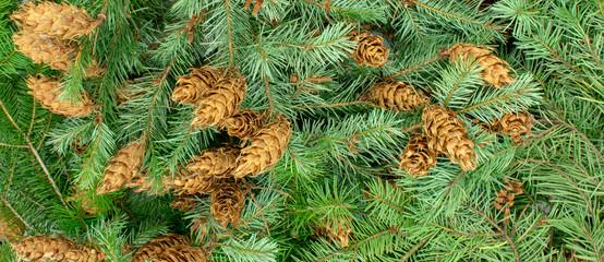Weihnachtlicher Banner-Hintergrund aus Tannenzweigen und Tannenzapfen