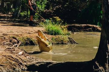 Poster Crocodile Australia townsville, billabong, crocodile