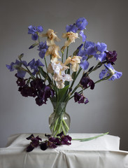 Beautiful bouquet of flowers iris in a glass vase on a gray background.
