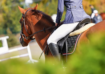 Sorrel horse and rider in uniform at show jumping competition. Equestrian sport background. Sunny day.