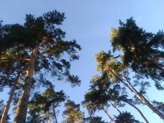 Low angle, trees against sky