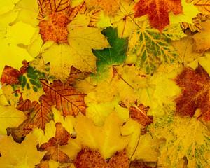 schöner herbstlicher Hintergrund aus Blättern in kräftigen Farben