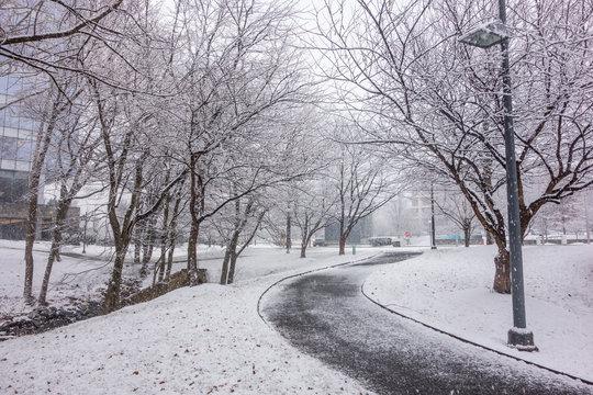 First snow, winter time in Park. Walkway between snowy fields. .