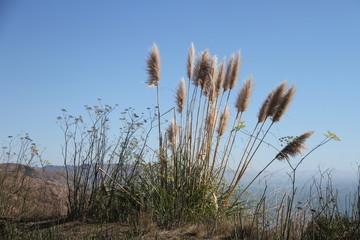 Salt Point State Park California