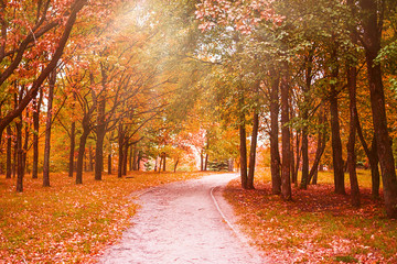 autumn alley, the path is covered with falling autumn foliage, red and yellow color