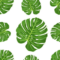 Vector Illustration of Monstera. Drawing of Large Tropical American Climbing Plant. Botanival and Floral Picture