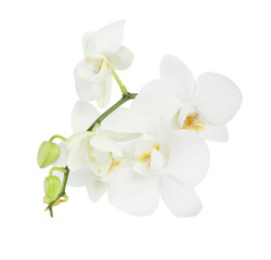 Tuinposter Orchidee Branch with beautiful orchid flowers on white background. Tropical plant