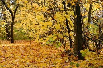 Park at autumn.