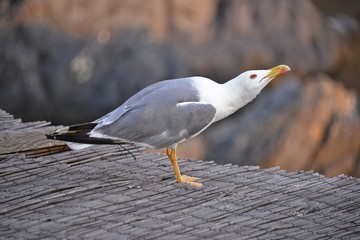 This is a view of seagull sitting on the roof.