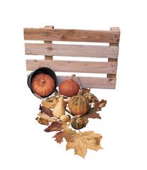 verschiedene Sorten Kürbis mit Herbstlaub und Eimer vor einer Holzpalette. Auf weiß isoliert
