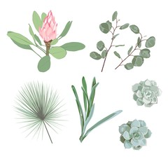 Botanical Elements: palm leaves, tropical protea flowers, succulent and silver dollar eucalyptus.