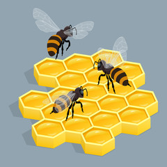Bees on comb isolated vector isometric illustration. Sealed honeycombs. Bees crawl on honeycomb.