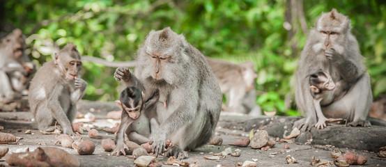 Photo of monkey family eating fruits in secret monkey forest