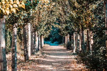Incredible path through the forest surrounded by trees. road near Aranjuez, Spain. Horizontal and in autumn edited photo..