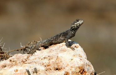 ящерица сидит на камне и греется под солнцем