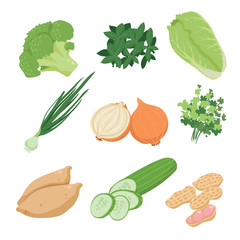 vegetable vector collection design