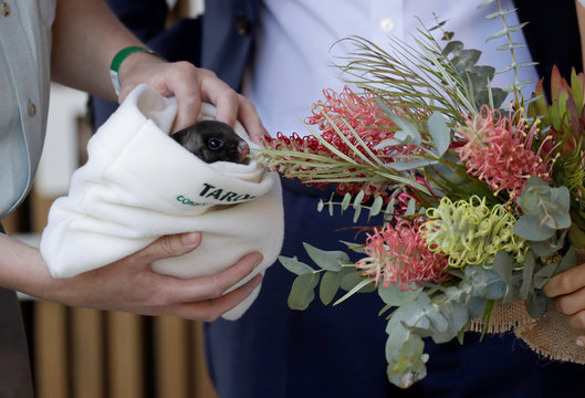 Britain's Prince Harry and Meghan, Duchess of Sussex are shown a yellow bellied glider during a ceremony at Taronga Zoo in Sydney