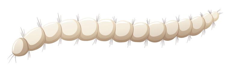 Flea larva white background