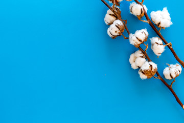 Branch of cotton on blue background top view copy space