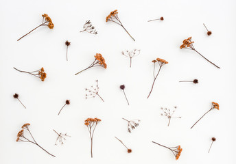 Dry thistles and umbrella plants on white canvas