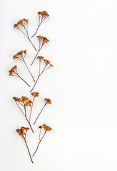 Ornament made of dry umbrella plants