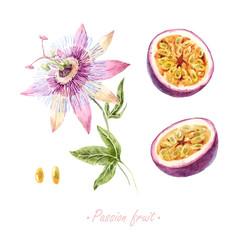Fototapete - Watercolor passion fruit set